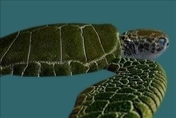sea turtle 3d model ma mb 85532