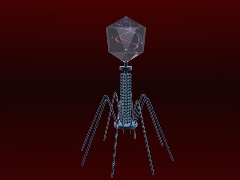Bacteriophage Virus ( 148.8KB jpg by S.E )