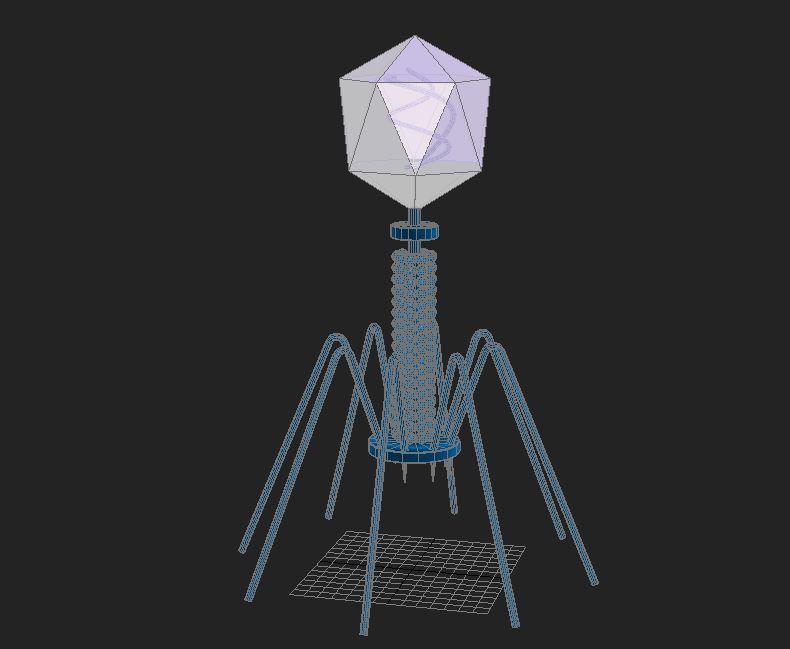 Bacteriophage Virus ( 42.91KB jpg by S.E )