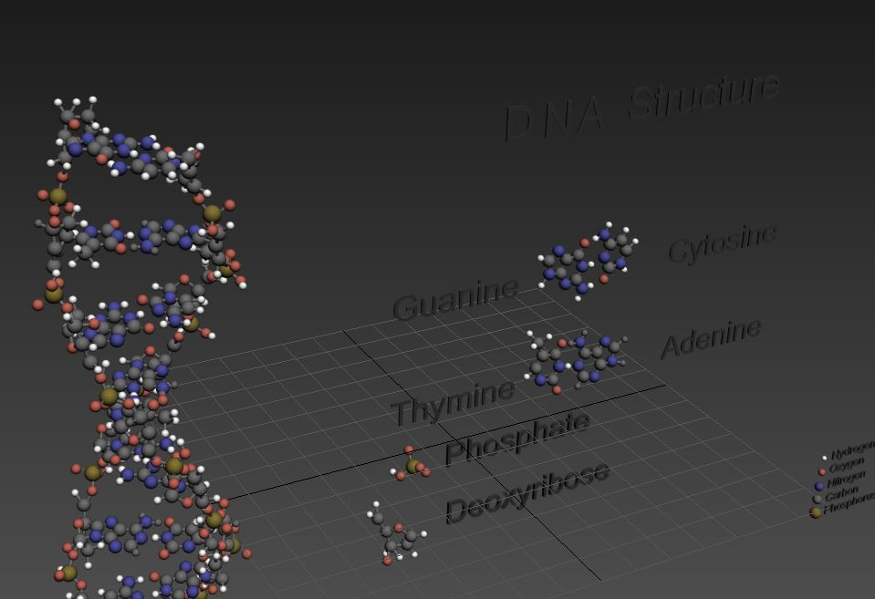 DNA Double Helix ( 59.98KB jpg by S.E )