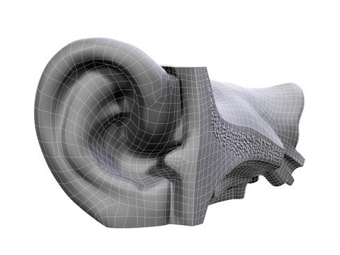 ear 3d model 3ds max c4d lwo ma mb obj 114442