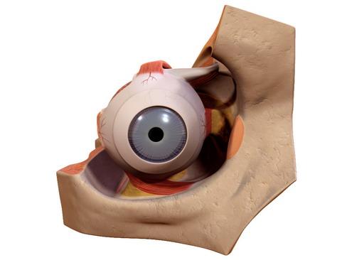 Eye 3d model 3ds max c4d lwo lws lw ma mb obj 114609