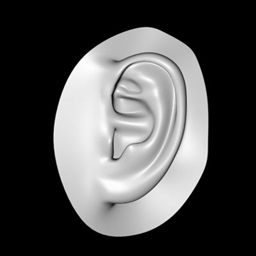 human ear.zip 3d model 3ds dxf fbx c4d obj 85019
