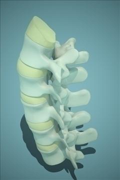 backbones 3d model 3ds max fbx 111668