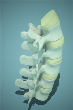 backbones 3d model 3ds max fbx 111670