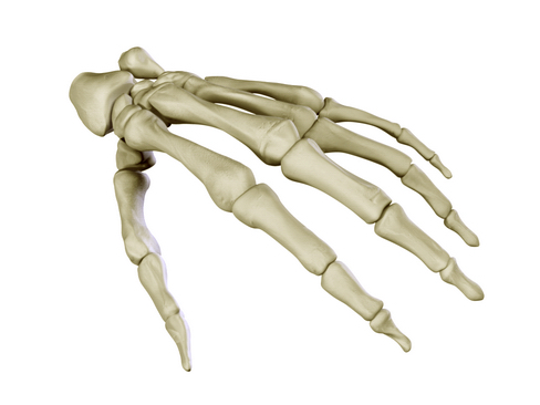 hand skeleton 3d model 3ds max c4d lwo ma mb obj 116023