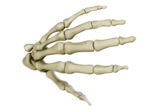 hand skeleton 3d model 3ds max c4d lwo ma mb obj 116025