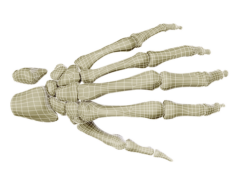 hand skeleton 3d model 3ds max c4d lwo ma mb obj 116028