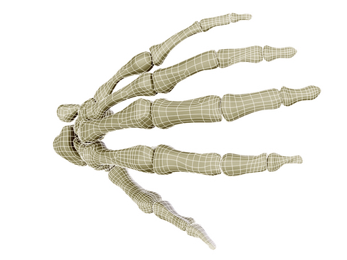 hand skeleton 3d model 3ds max c4d lwo ma mb obj 116029