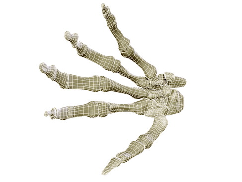 hand skeleton 3d model 3ds max c4d lwo ma mb obj 116030