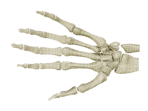 hand skeleton 3d model 3ds max c4d lwo ma mb obj 116031
