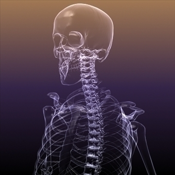 skeleton of a human x ray scan renderready 3d model 3ds max dxf fbx c4d lwo hrc xsi obj 111969