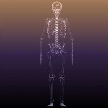 skeleton of a human x ray scan renderready 3d model 3ds max dxf fbx c4d lwo hrc xsi obj 111970