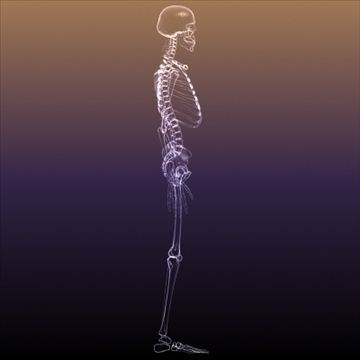 Skeleton of a Human X Ray scan RenderReady