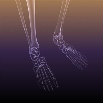 skeleton of a human x ray scan renderready 3d model 3ds max dxf fbx c4d lwo hrc xsi obj 111974