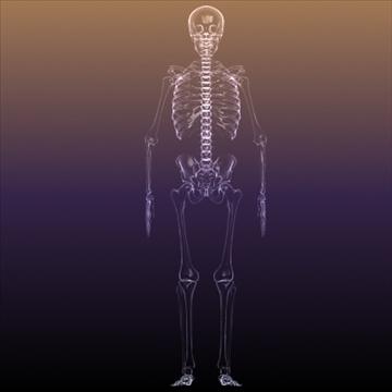 Skeleton of a Human X Ray scan RenderReady ( 60.01KB jpg by 5starsModels )