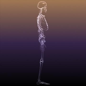 Skeleton of a Human X Ray scan RenderReady ( 56.24KB jpg by 5starsModels )