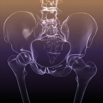 Skeleton of a Human X Ray scan RenderReady ( 77.26KB jpg by 5starsModels )