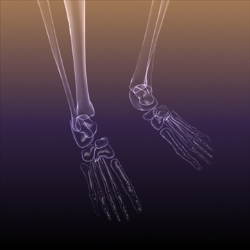 Skeleton of a Human X Ray scan RenderReady ( 62.56KB jpg by 5starsModels )