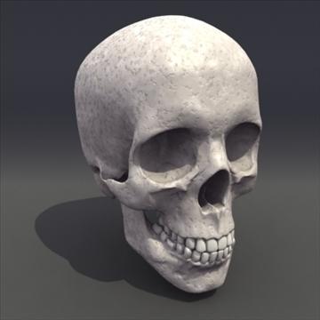 skull_human biomedicīnas 3d modelis 3ds max fbx lwo ma mb hrc xsi obj 111101