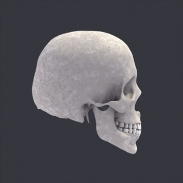 skull_human biomedical 3d model 3ds max fbx lwo ma mb hrc xsi obj 111102