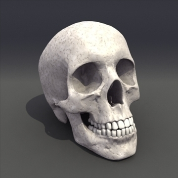 skull_human biomedical 3d model 3ds max fbx lwo ma mb hrc xsi obj 111103