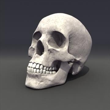 skull_human biomedical 3d model 3ds max fbx lwo ma mb hrc xsi obj 111104