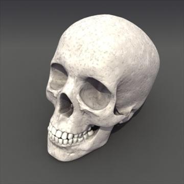 skull_human biomedical 3d model 3ds max fbx lwo ma mb hrc xsi obj 111105