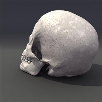 skull_human biomedical 3d model 3ds max fbx lwo ma mb hrc xsi obj 111106