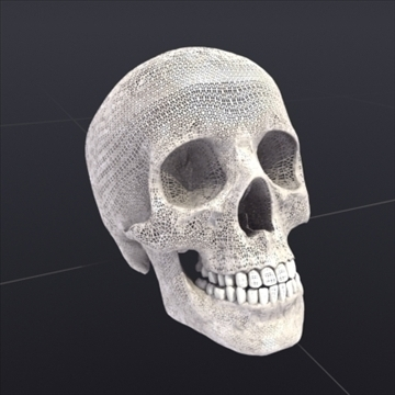 skull_human biomedical 3d model 3ds max fbx lwo ma mb hrc xsi obj 111108