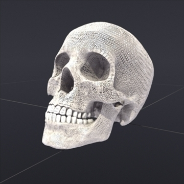 skull_human biomedical 3d model 3ds max fbx lwo ma mb hrc xsi obj 111109