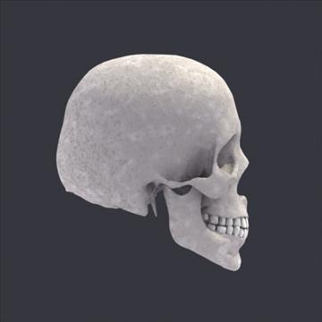 Skull_Human Biomedical 3D model ( 54.56KB jpg by 3DArtisan )