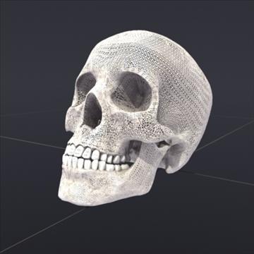 Skull_Human Biomedical 3D model ( 75.68KB jpg by 3DArtisan )