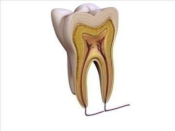 tooth v1 3d model 3ds max c4d lwo ma mb obj 97937
