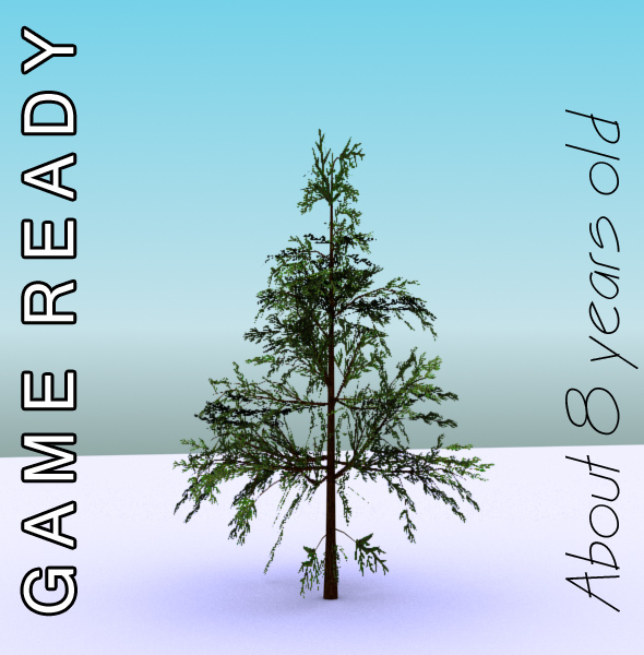 gameready low poly tree pack 1 (lawson's cypress) 3d model 3ds max fbx c4d x ma mb texture obj 129578